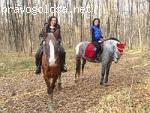конный клуб «Mon Ami».