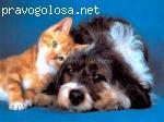 """Гостиница для домашних животных """"Шера с Машерой"""" отзывы"""