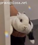 Питомник Царский Кролик отзывы