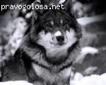 ИП Сошин Анатолий Сергеевич ИНН: 760406849307 Эко-страхование отзывы