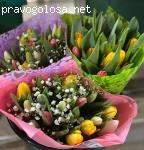 Panin Plants отзывы