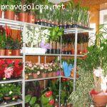 Магазин Зелёный Мир