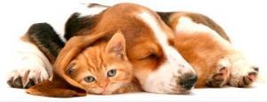 Сеть ветеринарных клиник Кремус